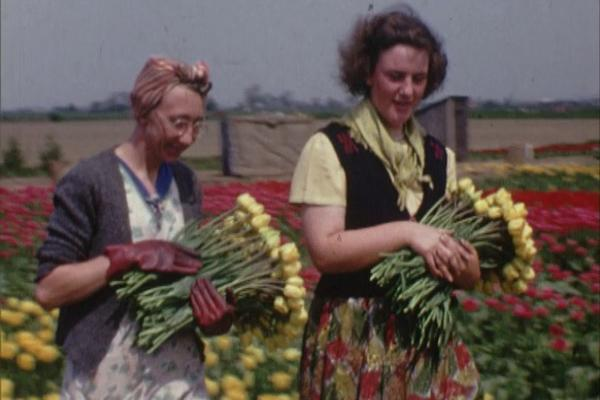 A colour still image of two women harvesting tulips from an amateur 16mm film of 1953.